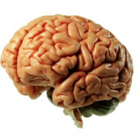Oorzaak multiple sclerose