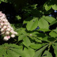 Natuurlijke remedies tegen aambeien